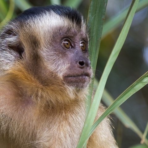 natureland-wildlife-zoo-capuchin-sm-min